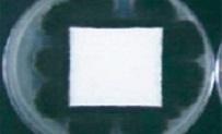 cemiflon-super12